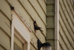 birds 081